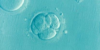 Vervolgonderzoek kernprocessen bij ontwikkeling van embryo's